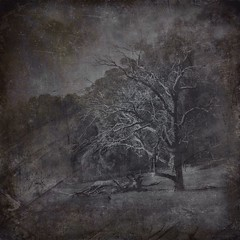 All Of Our Journeys Lead To Home 6 (michelle-robinson.com) Tags: michellerobinson michmutters fineartphotography monochrome blackandwhitephotography 4tografie flickrelite artphotography atmospheric photomanipulation photography adelaide southaustralia australia trees nature landscape editedonipadair2