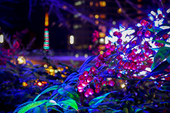 Tokyo Tower and  nandina (sapphire_rouge) Tags:   roppongi  japan   skyscraper roppongihills darkness illumination   tokyomidtown midton tokyotower