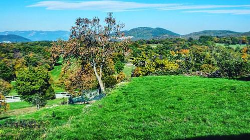20161029 #lipizza #instakoper #ig_slovenia #place #igslovenia #ig_worldclub #igersslovenia #lipica #koper #slovenija #cavalli #horse #slovenia #horses #campagna #natura #nature_perfection #green #verde #open #freetime #sky #sightseeing #pony #sea #landsca