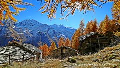 Pascieux (_Nick Outdoor Photography_) Tags: valnontey pascieux alpeggio valledaosta joy larches nickphotography fall autumn fallembrace parconazionaledelgranparadiso nationpark alps
