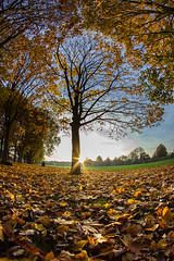Autumn in the park....... (Digital Diary........) Tags: fisheye wideangle canon lowlevel leaves goodlight autumn