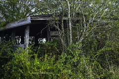 Lost in the Trees (Photographybyjw) Tags: lost trees grown over years ago this shed unknown purpose sits hopes for new life shot north carolina photographybyjw foliage rural country green