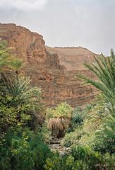 Les Gorges At-Mansour (louis de champs) Tags: minoltasrt101 mdrokkor45mm12 film kodak portra160 morocco gorges atmansour tafraoute palmtrees