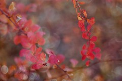 Fin d'automne1 (mamietherese1) Tags: world100f earthmarvels50earthfaves phvalue