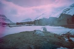 (Øystein Aspelund) Tags: artic travel 79deegreesnorth rudolfs wild reindeer svalbard nature landscape snow color 35mm film expired mountains norway light