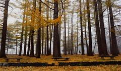 maruyama 360 (kaifudo) Tags: sapporo hokkaido japan maruyamapark earlywinter 初冬 札幌 北海道 円山 円山公園 nikon nikkor 24mmf14ged 24mm wow