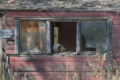 Light in the window (Rocky Pix) Tags: lightinthewindow lefthandcanyon abode window siding detail abandoned home dwelling mining boulder county colorado foothills rockypix rocky mountain pix wmichelkiteley f16130thsec135mm 70200mmf28gvr nikkor telezoom monopod
