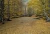 Yedigöller-7 (keynowski) Tags: yedigöller bolu turkey türkiye 1240mmf28pro olympusmzuikodigitaled1240mmf28pro em1 olympusomdem1 μ43 m43turkiye nature autumn forest tree landscape lake leaves