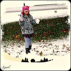 Little Miss Mischief (Lynn English) Tags: violet snow 2016 yard