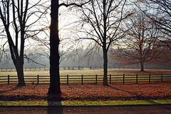 Winter Mist (AndyorDij) Tags: empingham england rutland uk unitedkingdom autumn winter andrewdejardin 2016 silhouette shadows sheep fence trees tree frost frosty misty mist leaves