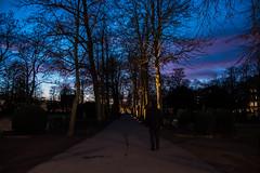 At the cemetery (Maria Eklind) Tags: nature himmel city outdoor gamlakyrkogården cemetery skymmning bluehour graveyard cityview twilight kyrkogård sky stad tree sweden evening malmö skånelän sverige se