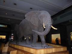 American Museum of Natural History New York November 2016 (23) (Richie Wisbey) Tags: american museum natural history upper west side new york city usa central park night exhibits dumdum dum monkey dinosaur bones fossils explore vast building easter island head theodore teddy roosevelt animals richard wisbey richie flickr