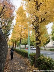 (takafumionodera) Tags: autumnleaves harajuku japan olympus penf tokyo