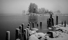 Wet snow (>>Marko<<) Tags: kuhasalo pielinen pielisjoki joensuu suomi finland canon valokuvaus lake jrvi joki river water outdoor bw blackandwhite monochrome