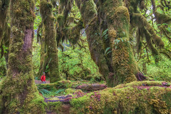 The Ancient Forest - Olympic National Park, WA (FollowingNature) Tags: hohrainforest olympicnationalpark followingnature selfie forest ancientforest