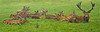 Red deer and his herd (Foto Martien) Tags: reddeer europeanreddeer westerneuropeanreddeer elk wapiti bactrianreddeer bukharareddeer edelhert roodwild edelhirsch rothirsch rotwild ciervocolorado ciervobactriano ciervorojo cerfèlaphe cerfdebactriane cerfrouge cervuselaphus male stag hart mannelijk man bok hert europe caucasusmountains asiaminor westerncentralasia atlasmountains morocco algeria tunisia norwesternafrica australia newzealand westernusa canada chile argentina wildparkfrankenhof wildlifepark reken münsterland nordrheinwestfalen germany deutschland duitsland dierenpark dierentuin zoo geotaggedwithgps sonyilca77m2 sonyalpha77mark2 sonyalpha77ii a77 sonyilca77markii tamron70300mmf456sp martienuiterweerd fotomartien