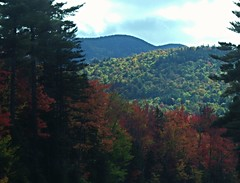 """This is the """"Gap Vista Scenery"""" along the Kanc - IMGP6625 (catchesthelight) Tags: northernnewengland nh nature mountains thekanc misspelled kangamangushighway kangamagushighway mustsee constructed 1959 traveled overamillionpeopleeachyear thekancamagushighway 34mileeastwestchannel 800000acre whitemountainnationalforest lincolnnhtoconwaynh trees change leaves summergreens breathtaking shadesofyellow red fall illuminated colorful dramatic enjoyable leafpeepingroute"""