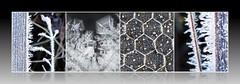 under the boardwalk .... (Edinburgh Nette ...) Tags: collages redmoss december16 ice crystals chickenwire wood structures boardwalk bolero
