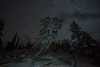 When you know D75_7823 (steve bond Photog) Tags: yosemitenationalpark tree stars nationalpark nikon nightscape drama