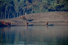 Ook wij willen drinken. (limburgs_heksje) Tags: nederland niederlande netherlands noord brabant beekse bergen safaripark dierenpark