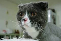 DSC_7475 (archiwu945) Tags: china cat kaohsiung   nikon1 nikon1j2