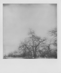 Trees (Jacob's Camera Closet) Tags: camera trees white black film project polaroid sx70 instant impossible px100