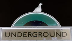 Underground (Dr John2005) Tags: city urban london underground pigeon metropolis inversion tottenhamcourtroad johnperivolaris fujixpro1