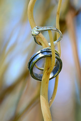 Wedding Bands, Anthony and Dena Wedding, South Lake Tahoe, California (Damon Tighe) Tags: california ca wedding detail band tahoe marriage ring diamond bands rings stick setup