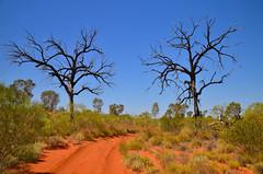 Canning Stock Route (17 South) Tags: nature landscape australia outback westernaustralia csr australianoutback outbackaustralia 17south canningstockroute redsanddunes gibsondesert littlesandydesert pathslesstravelled gibsondesertnorth