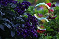 Soap bubbles (JillchenB) Tags: color art garden colorful kunst jardin farbe garten bunt soapbubbles farben seifenblasen seifenblase farbenfroh