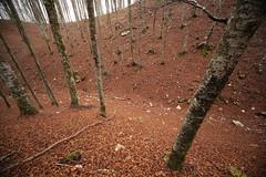 ∼ (formicacreativa) Tags: del bosco faggio cansiglio pian faggi piandelcansiglio