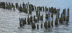 Seagulls (AdjaFong) Tags: seagulls balticsea usedom