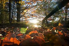 Sunset @ Lake Walchen / Walchensee .. (daitoZen) Tags: autumn light sunset sun lake alps colour fall water germany landscape bavaria star scenery europe pentax walchensee k5 bavarian kochel jachenau imgp3076ff