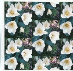 Hello! (winterblossom58) Tags: birthday flowers wedding wallpaper flower floral garden spring pretty tulips tulip lovely giftwrap weddinganniversary springtime fabrics flowery flowerart whitetulips walldecals