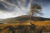 Tree of Arklet (SwaloPhoto) Tags: autumn tree clouds zeiss scotland nationalpark shadows availablelight lochlomond ze stirlingshire thetrossachs stronachlachar thehighlands locharklet nationaltreeweek canoneos5dmkii distagont2821 b829 distagon2128ze britishtreecouncil sat23rdnovembersun1stdecember2013