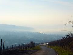 December Blues in Trier (picaddict) Tags: mist fog germany december nebel dezember trier mosel wineyards moselriver petrisberg weinberge lgsmitnebel