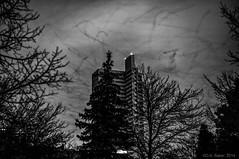 """Night Flights"" (D A Baker) Tags: trees building dan birds silhouette night square one flying long exposure downtown baker fort daniel branches wayne flight indiana da summit blackbirds fortwayne danielbaker danielabaker"