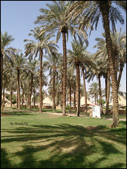 Garden (Norah_Studio) Tags: wood morning trees light shadow sky sunlight plant tree green nature colors beautiful grass garden palms happy colorful sony relaxation riyadh alqasr sonyxperiaz xperiaz