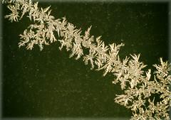 Die Morgensonne schleckt innerhalb Minuten den Zauber von Eiskristallen weg - Ice crystals in the morning sun! (Sonnenblume) Tags: winter kalt garten eisblumen morgensonne gefroren eiskristalle mygearandme naturimwinter terrassenfenster icecrystalsinthemorningsun