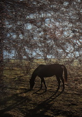Supper Time (Sun Chaser Originals) Tags: autumn horses plants color nature grass animals rural scenery colorado farm blended domesticanimals scenes platteville finishedphotos
