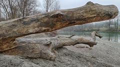 Liegender Baumstamm (novofotoo) Tags: bayern sand inn au landschaft kraiburg baumstumpf flus deutschlanddeutschland bayernbayern pürten flusskilometer122 flusufer