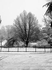 Montsouris sous la neige (Philippe LAURET, Paris) Tags: park blackandwhite snow paris france tree garden flora noiretblanc jardin neige arbre iledefrance parc paysages flore montsouris parcmontsouris