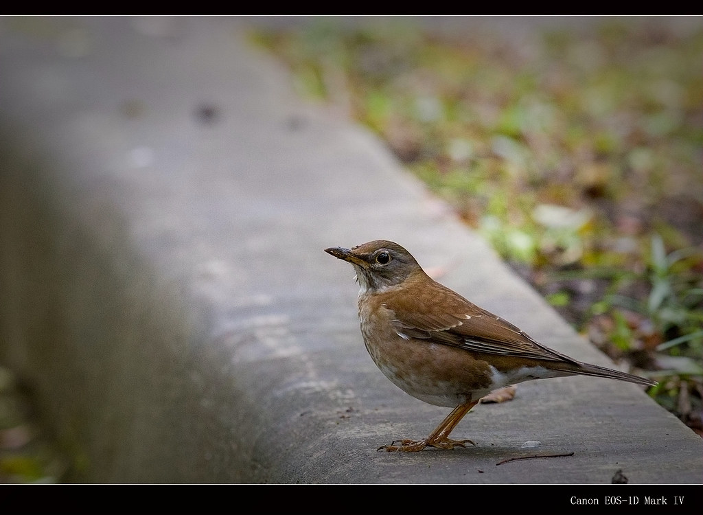 又來鳥了....