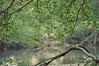 Nature Walk (Fancy E) Tags: spring deer penningtonnj