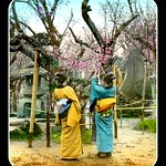 SHOW ME THE OBI !!! -- Poems, Dreams, and Plum Blossoms in OLD JAPAN thumbnail