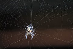 Web (Simos1968) Tags: abandoned spider place web