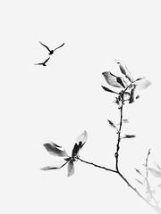 Printemps, Plaisirs démodés. Sping , Old -fashion pleasures (Amiela40) Tags: life birds fly spring vol printemps plantes oiseaux vie léger plaisirsdémodés oldfashionpleasures