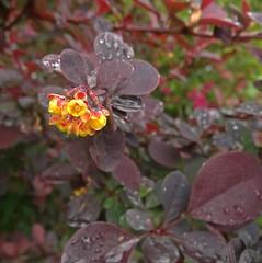 Marooned (Bricheno) Tags: flowers scotland escocia szkocja renfrew schottland scozia cosse  esccia   bricheno scoia