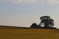 landscape (Xtraphoto) Tags: morning light tree field canon landscape eos morninglight feld landschaft morgen baum 30d morgenlicht