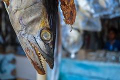 Tuna Dry Fish (MH Photograaphy) Tags: asiasociety depth field texture outdoor travel coxsbazar bangladesh dryfish tuna beach sandy tastytunafish depthoffield